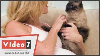 «بيطرى» يحذر محبى تربية القطط: احتضانهم أثناء النوم يسبب الجرب