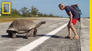 Explorer Interrupts Mating Tortoises, Slowest Chase Ever Ensues | National Geographic