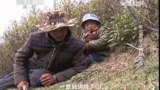 20140414 走近科学 冬虫夏草之西藏地金