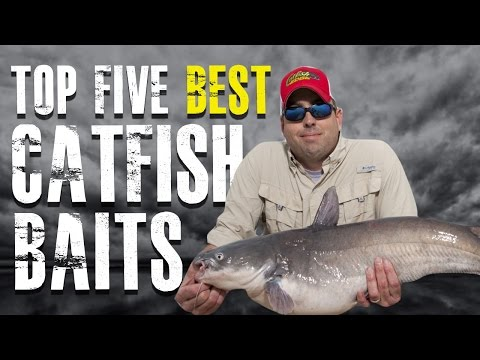 Top 5 Best Catfish Baits Made Simple - Blue. Channel. Flathead Catfish