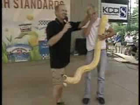 Snake Slithers Into Reporters Pants On Live TV
