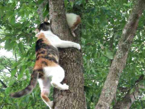 気に登って降りられなくなった子猫。それを助けに向かうママ猫☆