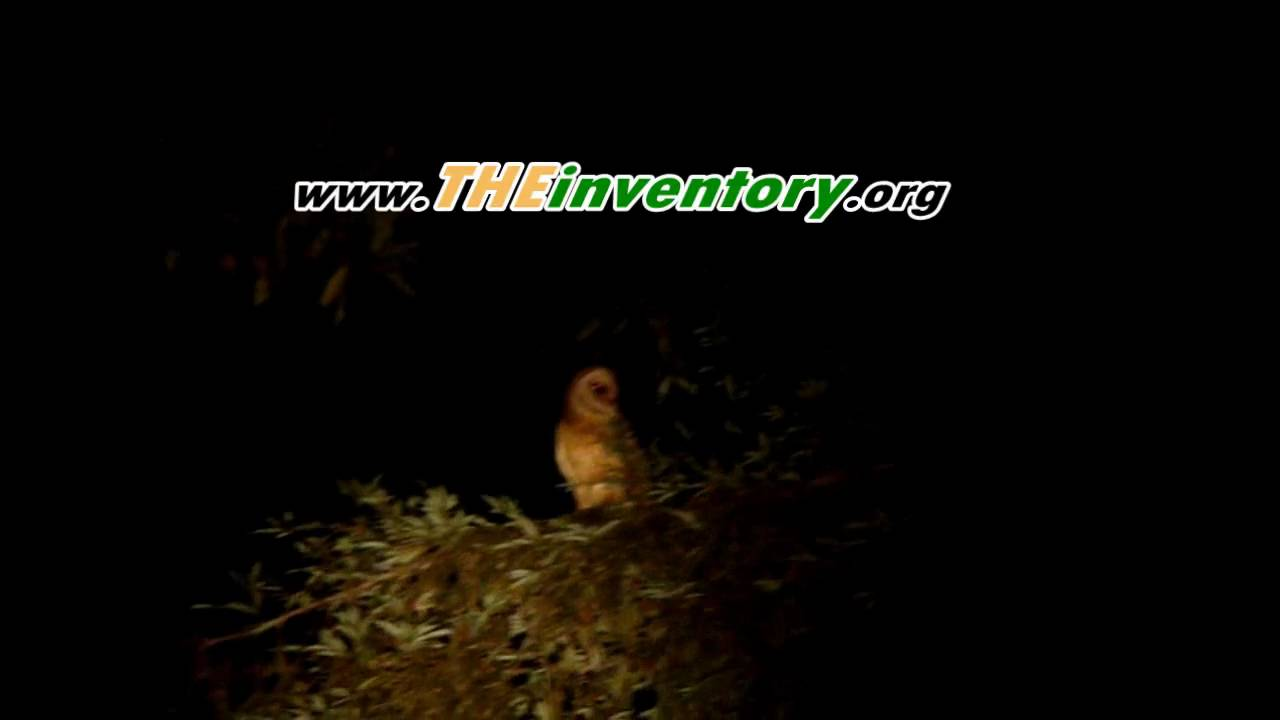 Backyard Sounds At Night : baby Owl making weird noises in back yard wtf  YouTube