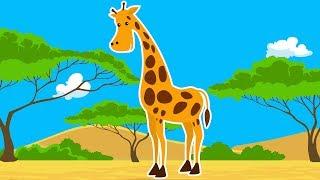 Про жирафа для детей - развивающий мультик про диких животных Африки - Amaze Kids