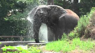 Splish Splash (Elephant Style)