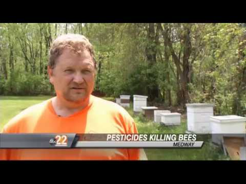 Pesticides Killing Our Honeybees