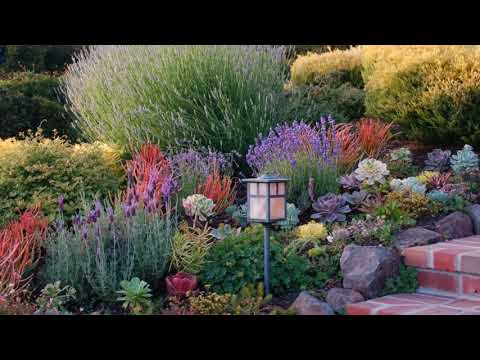 Landscaping Small Front Yards With Native Plants California - Garden Design