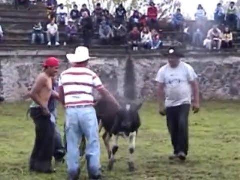 PURUAGUITA JARIPEO.wmv