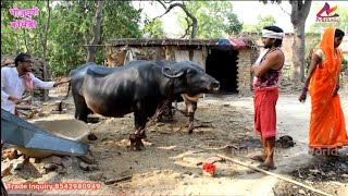 Bhojpuri Comedy | भईस दुध ना देले बुढ़ा पुजा कारे नारियल अगरबत्ती से  | khesari 2, Neha ji | HD VIDEO