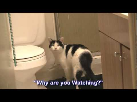 Mr Jingles - The Showering Cat