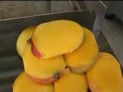 Deshuesador de Mangos HGW