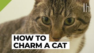 How to Get a Cat to Like You | Lifehacker