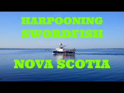Harpoon Swordfish Fishing