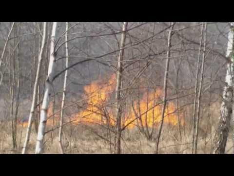 Groźne Pożary Suchych Traw W Częstochowie! Alarmowo OSP!