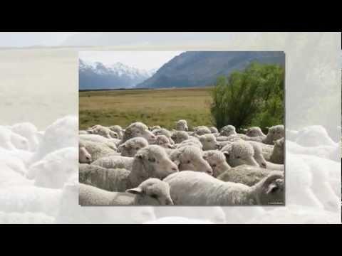 Povestea unui ciobanas