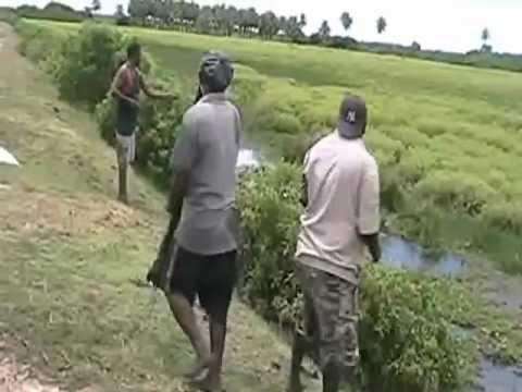No 72 Village boys on a fun trip cast-net fishing