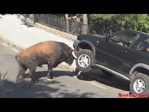 Állatok az autók ellen