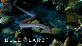 Brine pool of death - Blue Planet II: Episode 2 Preview - BBC One