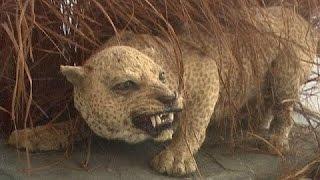 فيلم وثائقي-القطط القاتلة-HD