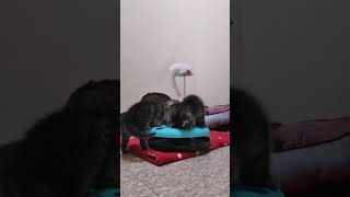 Bide Awhile Animal Shelter - Kitten Live Stream