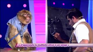 Artus & Arnaud Tsamere - J'apprends la multiplication à un singe #ONDAR