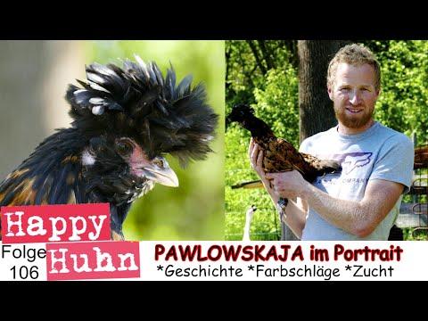 Happy Huhn Folge 106: Pawlowskaja Hühner im Rasseportrait, Russische Haubenhühner mit Bart