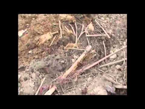 Raw: Rescue Effort for Afghans Hit by Landslide