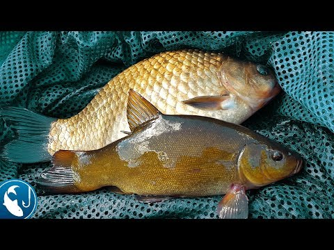 все о рыбной ловле карась окунь