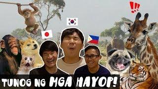 Ang Tunog Ng Mga Hayop Gamit Ang Tatlong Lenggwahe! Koreano Hapon Filipino