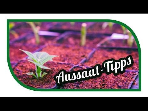 Aussaat Tipps | Jungpflanzenanzucht im Februar