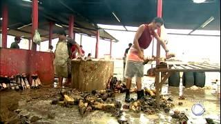 Em Pernambuco, crianças trabalham em matadouros em condições insalubres