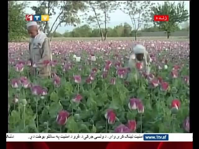 1TV Afghanistan Farsi News 12.11.2014