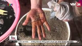 Thạch đen cao bằng - Ngon mà sạch | VTV24