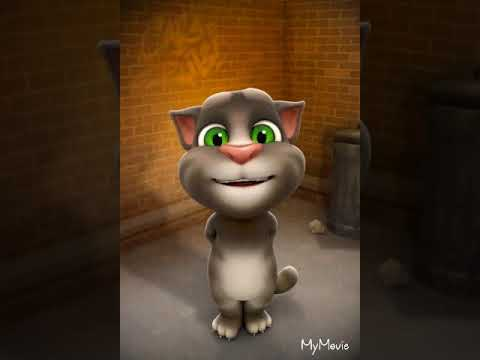 Gatto Tom