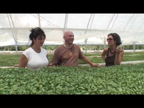 What is Hydroponic Farming?
