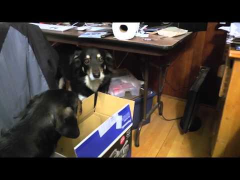 Dog Porn 2  New Camera New Editing video