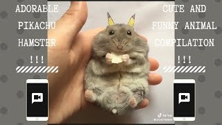 The Adorable Pikachu Hamster | NEW Funny and cute Animal-Compilation | 2018 P.1