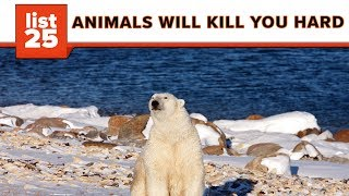 25 Most Dangerous Animals In The World