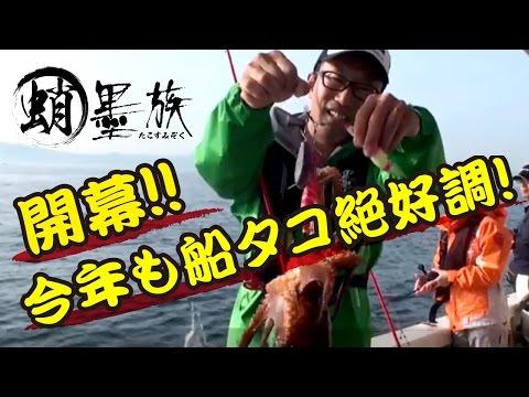 【蛸墨族】シーズン開幕!! 今年も船タコ絶好調!