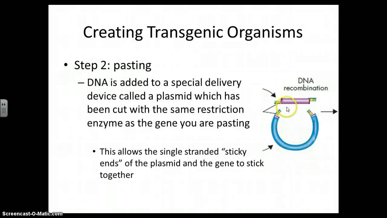 transgenic species essay
