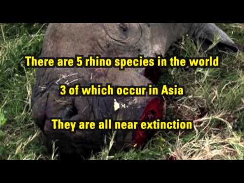 Talking Rhino to Asia - English Subtitles