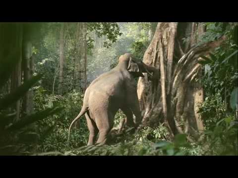 LG Elephant Y&R New York  Dante Ariola Infinia TV USA March 2010