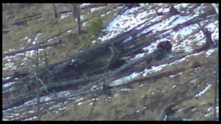Stalked by Wolves sunlight mountains wyoming must watch to end insane ending