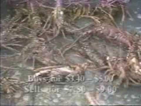 DI system: Growing lobster in aquaponics Diy