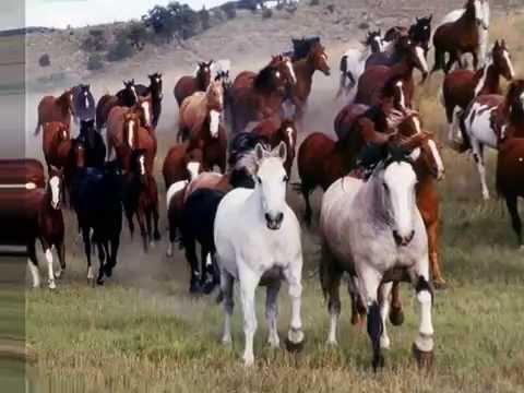 Caballos (galería de fotos) - Horses, Ennio Morricone