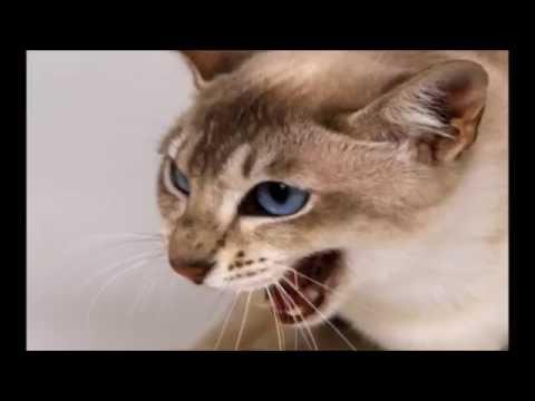 貓奴注意: 為什麼貓咪喜歡被摸頭?