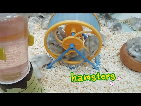 Crazy Hamsters Wheel Full Download Crazy Hamsters