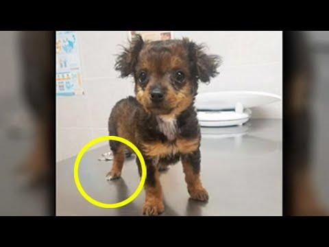 Tierarzt weigert sich gelähmten Hund einzuschläfern, Stunden später passiert es