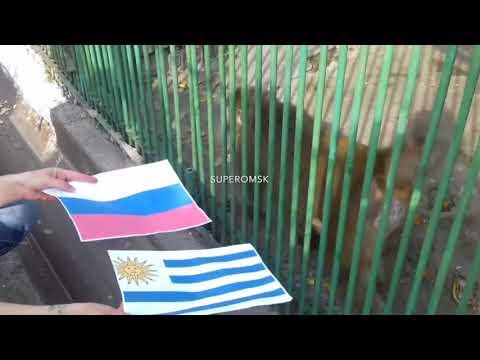 Омские макаки назвали победителя в матче Россия-Уругвай