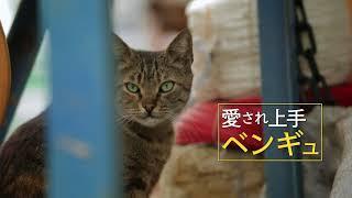 『猫が教えてくれたこと』予告編